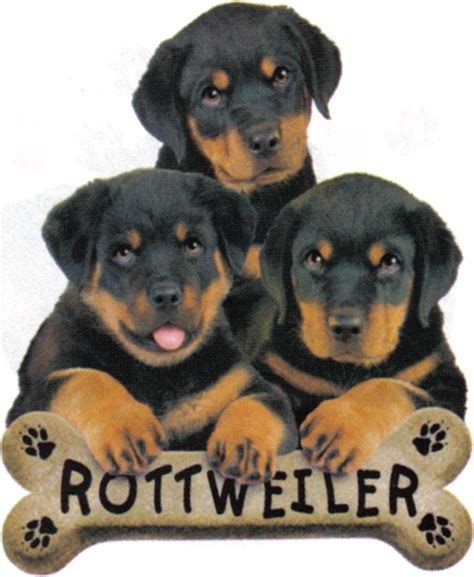 rottweiler puppies bc rottweiler dogs on rottweilers rottweiler puppies and german rottweiler