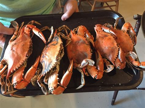 higgins crab house north higgins crab house north 62 billeder 146 anmeldelser fisk og skaldyr 128th st