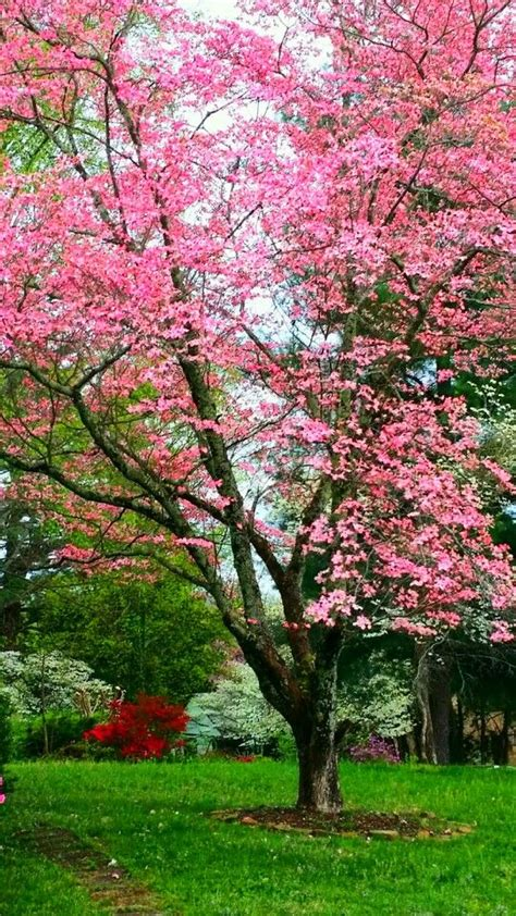 pink dogwood tree style pinterest