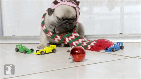 pug screen gif home alone recreated with pug puppies is the only you need to