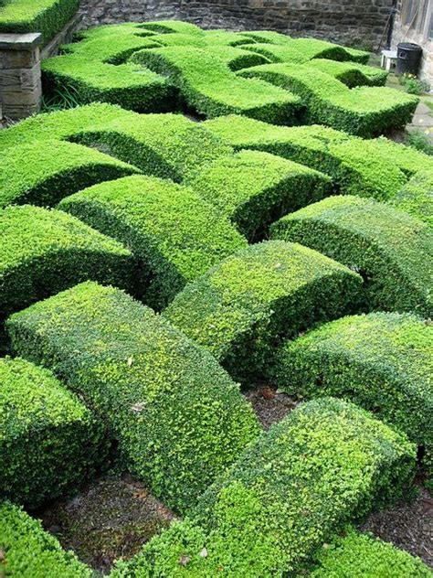box hedge topiary 29 best hedges images on