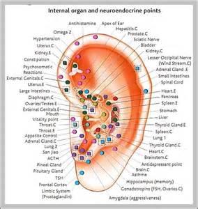 Internal organ locations