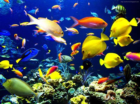 wallpaper colorful fish and interactive water underwater sea animal creatures plants pictures hq