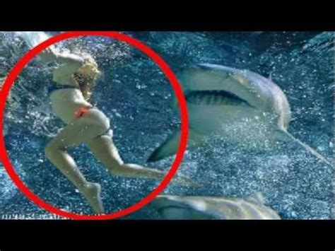 baby shark band 9 best images about great white shark vs baby seal cub on