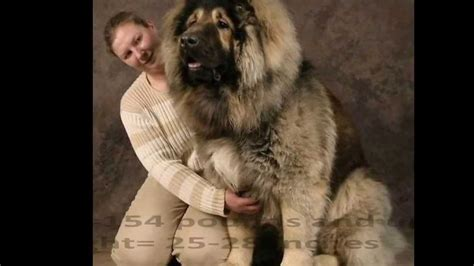 worlds dogs top 10 best and guard dogs in the world 2013