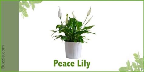 plants that do not need much sunlight indoor plants that don t need sunlight sunlight plants