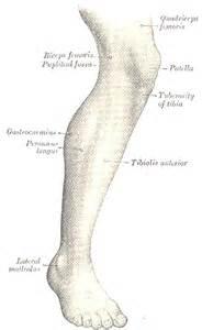 Leg Template by Steunk Design By Trevor3999 On Deviantart
