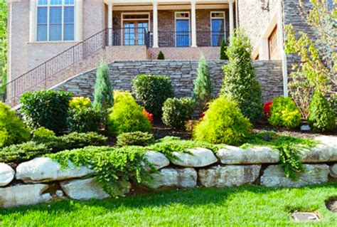 types of evergreens for landscaping trees and shrubs