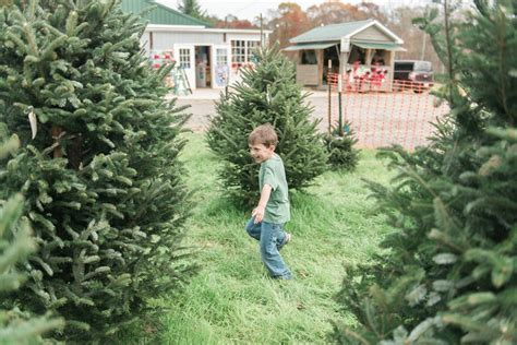 christmas tree farms with real estate in monroe or carbon county pa cut your own tree farms around lake wylie sc nc