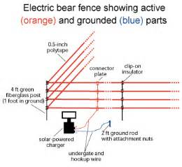 electric bear fences how they work what you should know