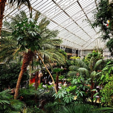 barbican conservatory londons beautiful indoor rainforest