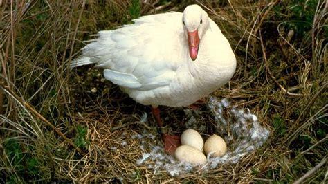 imagenes de animales que nacen del huevo 191 que es animalia 161 te apuesto a que no sabes 191 que es