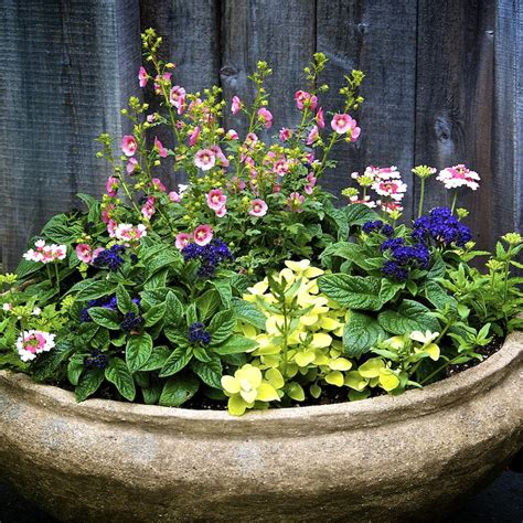 large container garden 5 tips for planting great looking large containers
