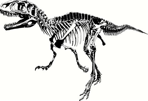 dinosaur bones template dinosaur bones template www imgkid the image kid