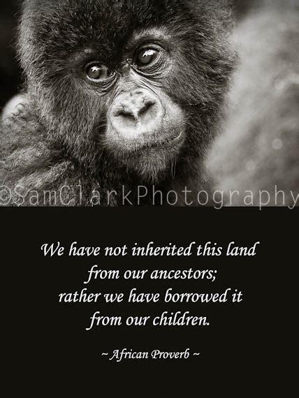 gorilla quotes image quotes  hippoquotescom