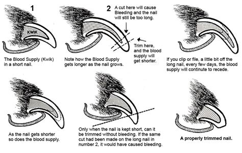 how to cut a dogs nails a stress free way to trim your s nails urdogs