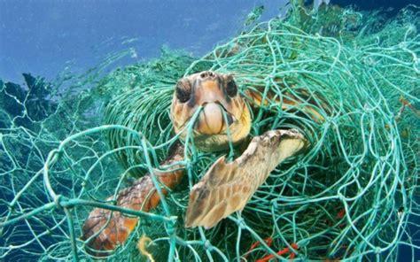 los animales marinos marine c 243 mo la basura da 241 a a los animales marinos diario presente