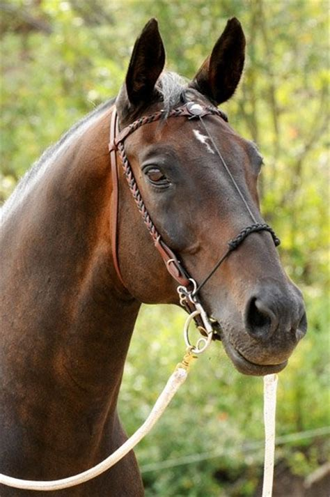 natural horse lover  savvy horse girl positive thoughts