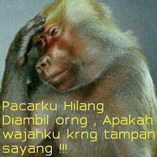 wallpaper lucu gambar monyet kehilangan pacar wallpaper