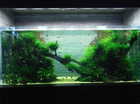 takashi amano aquascaping the passing of aquascaping legend takashi amano