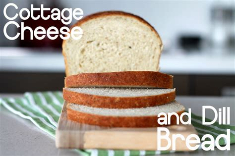 cottage dill bread cottage cheese and dill bread