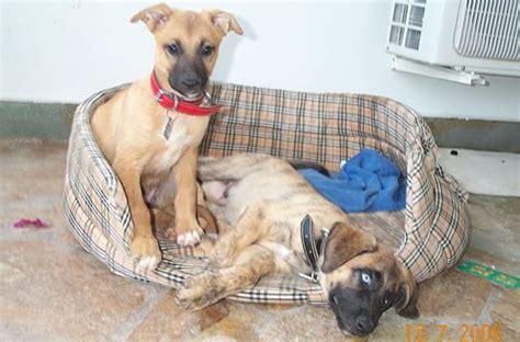 suche neues zuhause für meinen hund griechischer hund sucht neues zuhause
