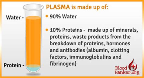 2 proteins found in blood plasma yr 10 topic 1 blood and circulation amazing world of