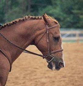 learn   reduce  horses pain holistic animal