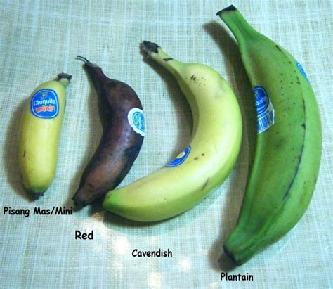 guide to six different types of bananas types of banana monkeys on the move fruits pinterest