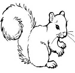 squirrel coloring page free squirrel coloring pages