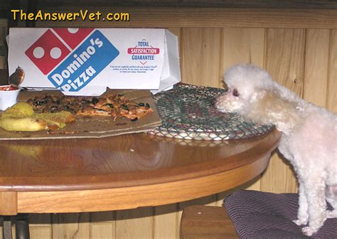 bladder stones diet what are bladder stones in dogs and cats and what are cystic calculi
