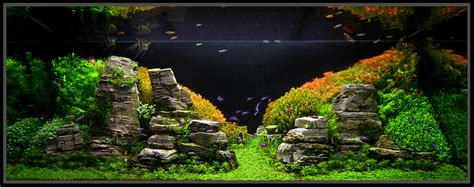 Aquascaping Live Rock Ideas Planted Aquarium Inspiration For A Fresh Year Imod
