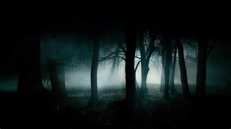 dark forest night image1 jpg dark forest backgrounds wallpaper cave