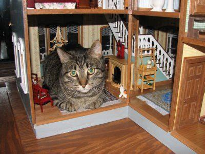139 Best Images About Cats In Dollhouses On Pinterest