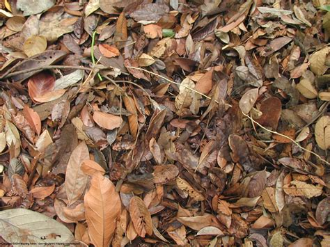 Dead Of Autumn fall dead leaves search on the hunt