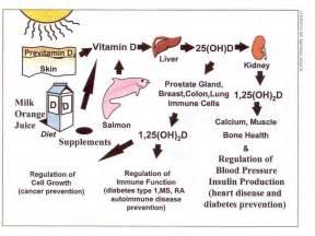 vitamin d le trop de vitamine d pourrait nuire 224 la sant 233