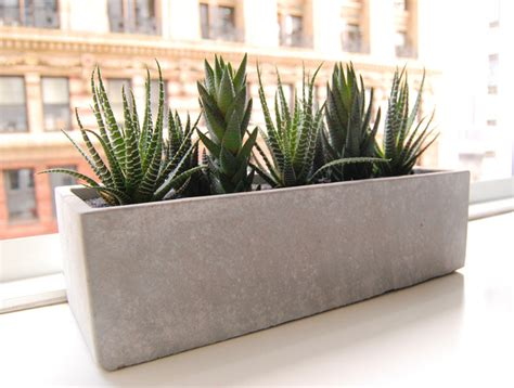 modern planters indoor lushmodern cactus garden cement planter modern indoor pots and planters new york by