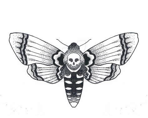 moth tattoo design moth design search sketches