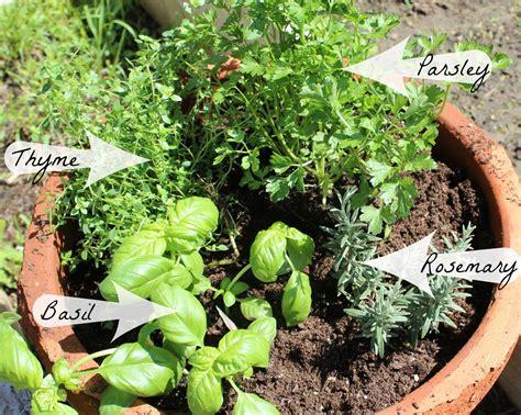 herb garden home everyday