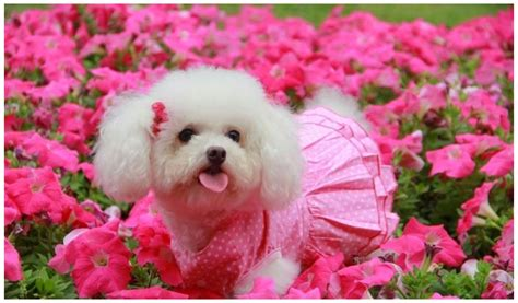 images of baby puppies baby dogs wallpapers