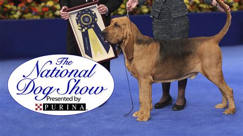 the national show national show presented by purina nbc