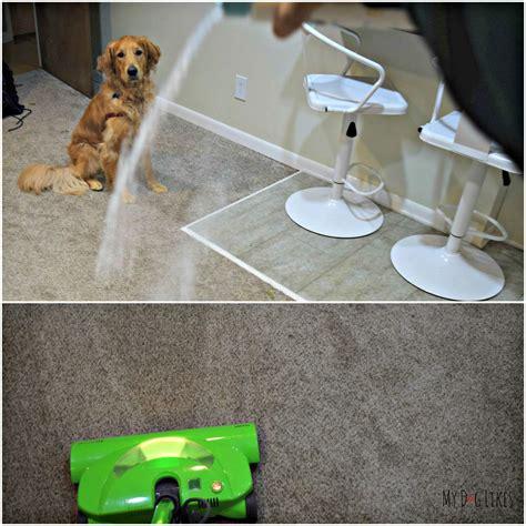is diatomaceous earth safe for dogs pet safe carpet flea carpet vidalondon