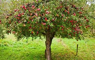 when should you spray fruit trees home fruit tree care this and summer the rock