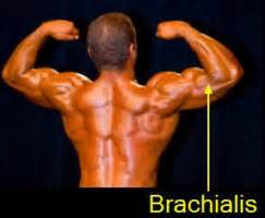 One of the best exercises that you can do to work the brachialis while