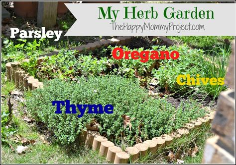 herb garden growing herbs gardeners supply grow your own food herbs 101 a pinch of healthy