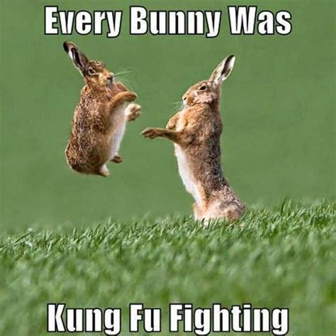 Rabbit Meme - 26 bunny memes that are way too cute for your screen