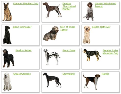 all types of dogs list of all types dogs breed breeds with name litle pups
