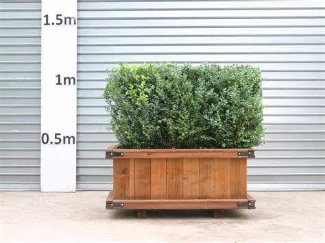 Hedge In Planter Boxes by Palmbrokers Catalogue Screening Hedges For Hire