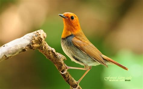 image gallery wildlife birds