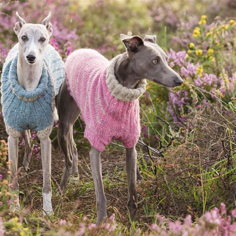 knitting pattern lurcher jumper wonderful whippet donegal knitting kits